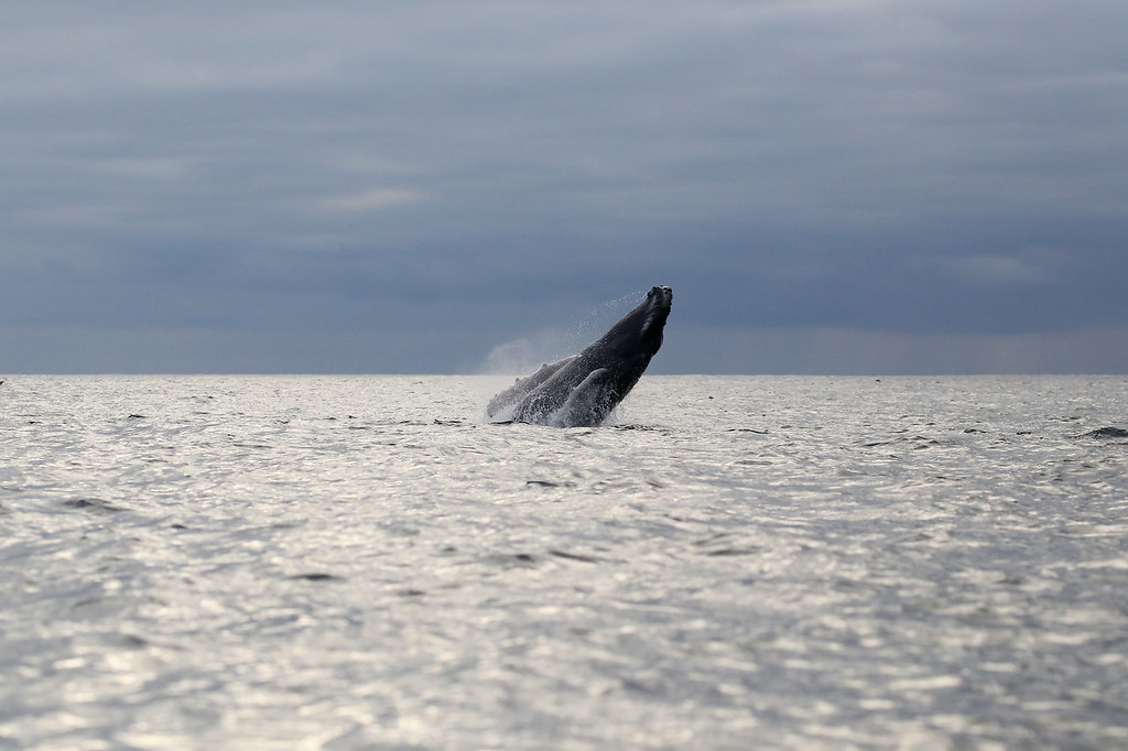 IMAGE: https://ybconway.smugmug.com/Galapagos-Islands-2915/i-KrfVqPV/0/XL/IMG_0395-XL.jpg