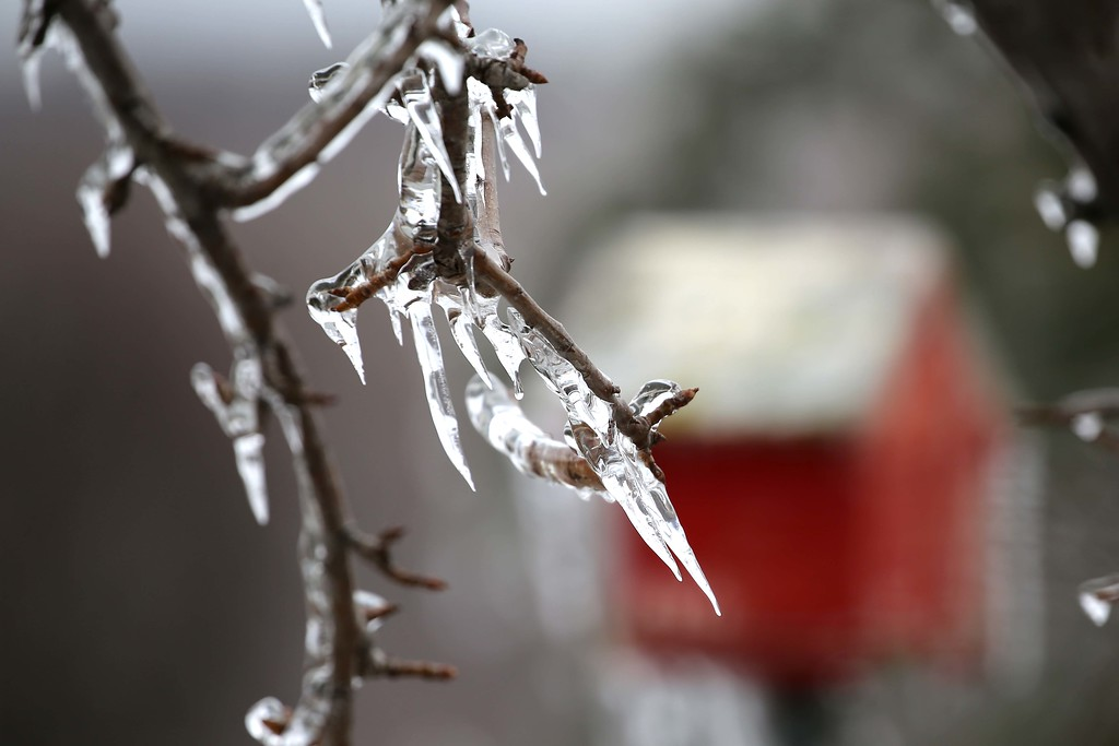 IMAGE: https://ybconway.smugmug.com/Ice-Storm/i-JQWfZzS/0/XL/Birdhouse-XL.jpg